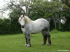 Le Percheron - Orne Normandie